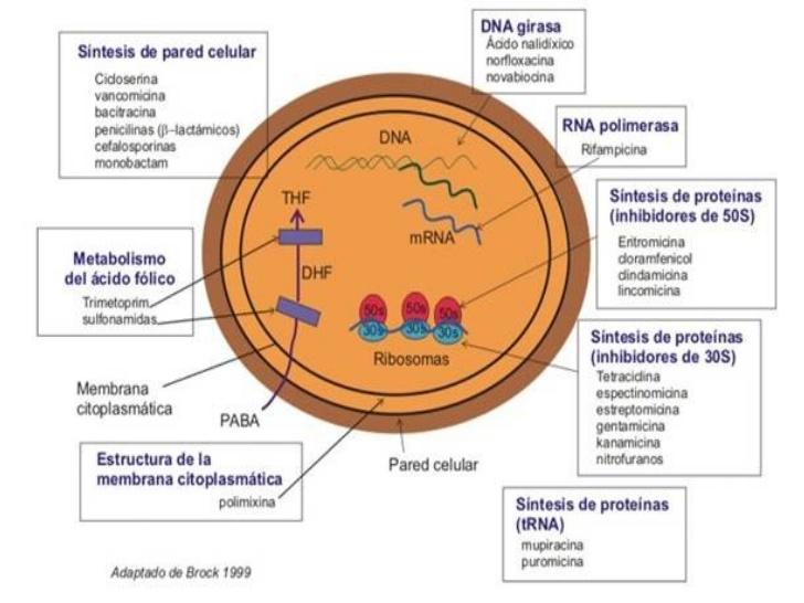 clasificacion-antibioticos-3-728
