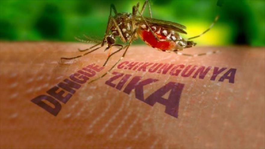 http://www.infectoteam.com/wp-content/uploads/2015/11/Virus-transmitidos-por-mosquitos.jpg