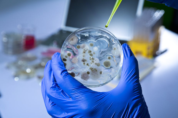 investigaciones en infectologia